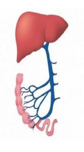 Liver Specialist in Nashik